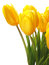 Free Flower Tulip Royalty Free Stock Photos - 29726838