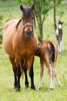 Free Horse Family Stock Photos - 29735933