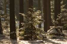 Free Winter In The Woods. Royalty Free Stock Photos - 29739478