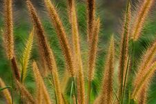 Free Flower Grass Stock Photography - 29745862