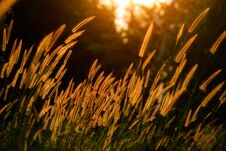 Free Flower Grass Stock Photography - 29745902