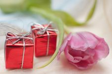 Free Tulip And Gifts Stock Photo - 29748030