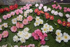Free Camellia, Flowers, Exposition Stock Photography - 29753332