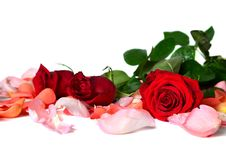 Free Roses Stock Photography - 29758192