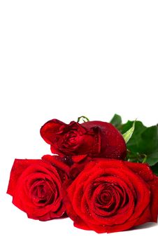 Free Roses Stock Images - 29758194