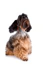 Free Decorative Doggie Stock Photos - 29762943