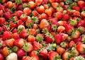 Free Strawberry Stock Photos - 29764903