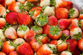Free Strawberry Royalty Free Stock Photography - 29765027