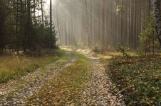 Forest In Autumn. Stock Photos
