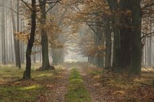 Forest In Autumn. Stock Photo