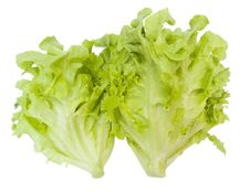 Free Fresh Oak Leaf Lettuce Stock Images - 29763674