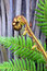 Free Koru Tree Fern Frond & Trunk Symbol Of New Zealand Stock Image - 29764231