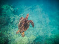 Free Sea Turtle Stock Photography - 29779692
