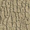 Free Old Oak Bark. Seamless Texture. Royalty Free Stock Photos - 29779938