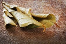 Free Dry Leaf Abstract Stock Photo - 29770250