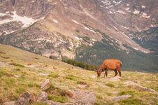 Free Elk Dot The Tundra Landscape Stock Photo - 29779500