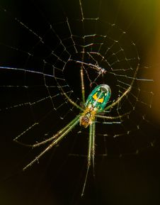 Free Green Spider In A Web Royalty Free Stock Photos - 29779538