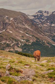Free Vertical Elk Dot The Landscape Royalty Free Stock Images - 29779749