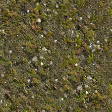 Free Mossy Wall Seamless Texture. Stock Photography - 29779982
