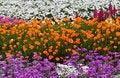 Free Flower Garden Royalty Free Stock Photo - 29787415