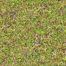 Free Grass. Seamless Texture. Royalty Free Stock Images - 29780109