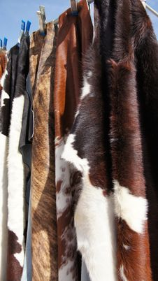Free Cow Hide Fur Rugs Royalty Free Stock Images - 29782539