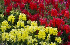 Free Flower Garden Stock Photography - 29787232