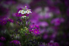 Free Flower Garden Stock Photography - 29787462