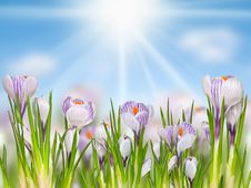 Free Beautiful Spring Flowers Stock Photos - 29788873