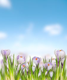 Free Beautiful Spring Flowers Stock Images - 29788874