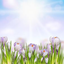 Free Beautiful Spring Flowers Royalty Free Stock Photo - 29788895