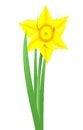 Free Daffodil Stock Image - 29791201