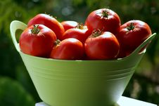 Free Tomatoes In Basket Stock Photography - 2980082