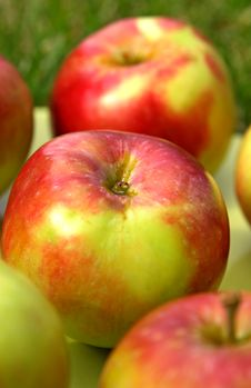 Free Summer Apples In Green Grass Royalty Free Stock Image - 2982116