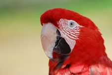 Free Scarlet Macaw Royalty Free Stock Images - 2982159