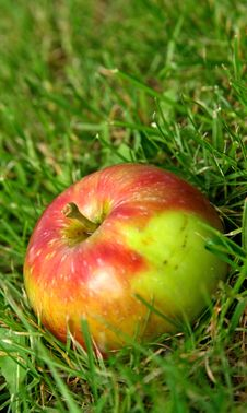 Free Summer Apples In Green Grass Stock Photo - 2982240