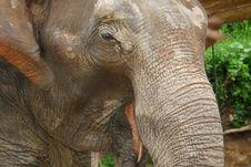 Free Elephant Close-up Stock Image - 2982851