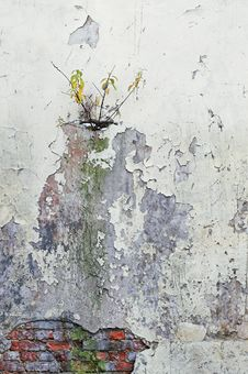 Free Corroded Wall Stock Photography - 2983282