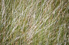 Free Field Of Grass Stock Photography - 2983512