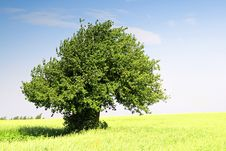 Free Summer Landscape. Single Tree On A Field Stock Images - 2983914