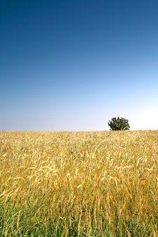 Free Summer Landscape. Royalty Free Stock Photo - 2983925