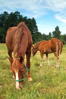 Free Horse Family Royalty Free Stock Photo - 2983965