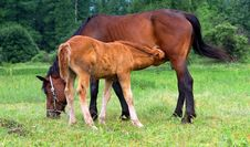 Free Horse Family Royalty Free Stock Photography - 2983967