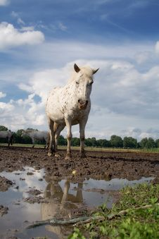 The Horse And Reflection Royalty Free Stock Image