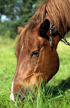 Free Happy Horse - Portrait Royalty Free Stock Images - 2984999