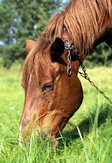 Free Happy Horse - Portrait Royalty Free Stock Photo - 2985005