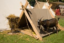 Free Goat With His Own Tent Royalty Free Stock Photography - 2985027