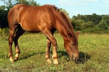 Free Friendly Horse In A Field Royalty Free Stock Photos - 2985328