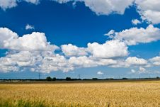 Free Wheat Field With Blue Sky Stock Photos - 2985353