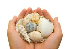 Free Unique Shells Stock Image - 2985421